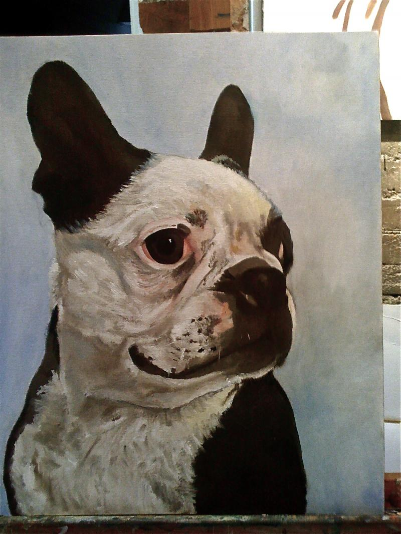 Stanley Pickles Boston Terrier Cornwall